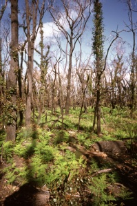 bush fire growth